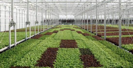 总部位于纽约的室内农业公司哥谭之绿筹集了8700万美元